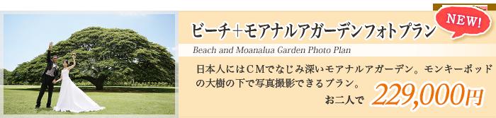 ビーチ+モアナルアガーデンフォトプラン 日本人にはCMでなじみ深いモアナルアガーデン。モンキーポッドの大樹の下で写真撮影できるプラン。
