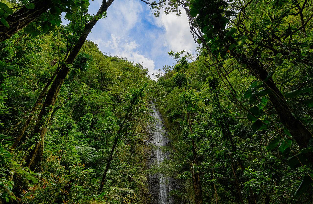 マノア特集。ハワイでローカル気分が楽しめる!マノアってどんな町?