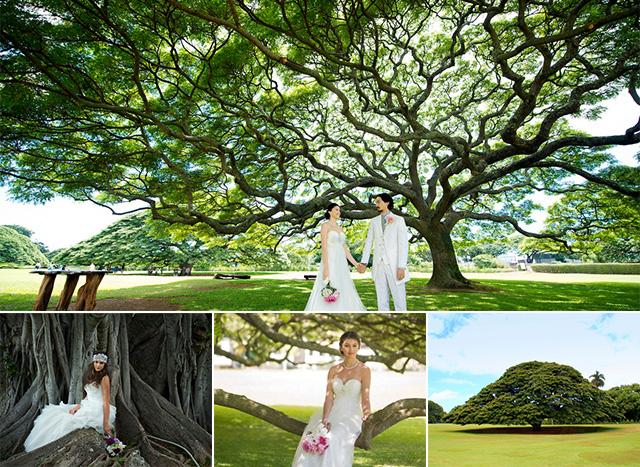 モアナルアガーデンで大きな木の前でのウエディングフォト